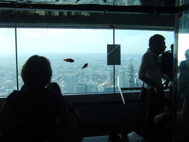 横浜の空を舞うクマノミ達…しつこい?|スカイガーデン