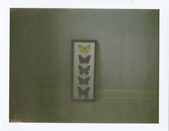66/365 (daphne og.) Tags: white film project polaroid photography floor framed butterflies days collection frame instant 365 690 expired 103 landcamera 100iso