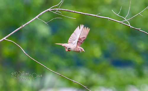 Flight of a Sparrow