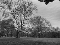 Landscape (brooksbos) Tags: trees winter blackandwhite bw landscape geotagged ma photography photo blackwhite massachusetts newengland olympus bostonma jamaicaplain brooks bostonist jamaicapond lurvely everyblock thatsboston xz1 brooksbos