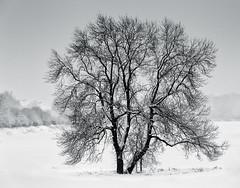Frhling. (unfassbar.) Tags: schnee winter blackandwhite grau baum tristesse schwarzweis