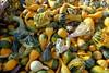 Fall harvest, Orange County, NY
