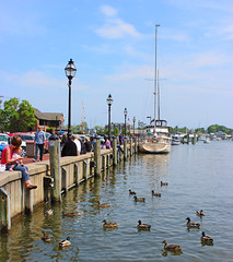 Harbor (GayelKnott) Tags: ducks annapolis marylalnd