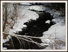 Fallen Birch (clickclique) Tags: snow tree ice water spring melting stream fallen birch