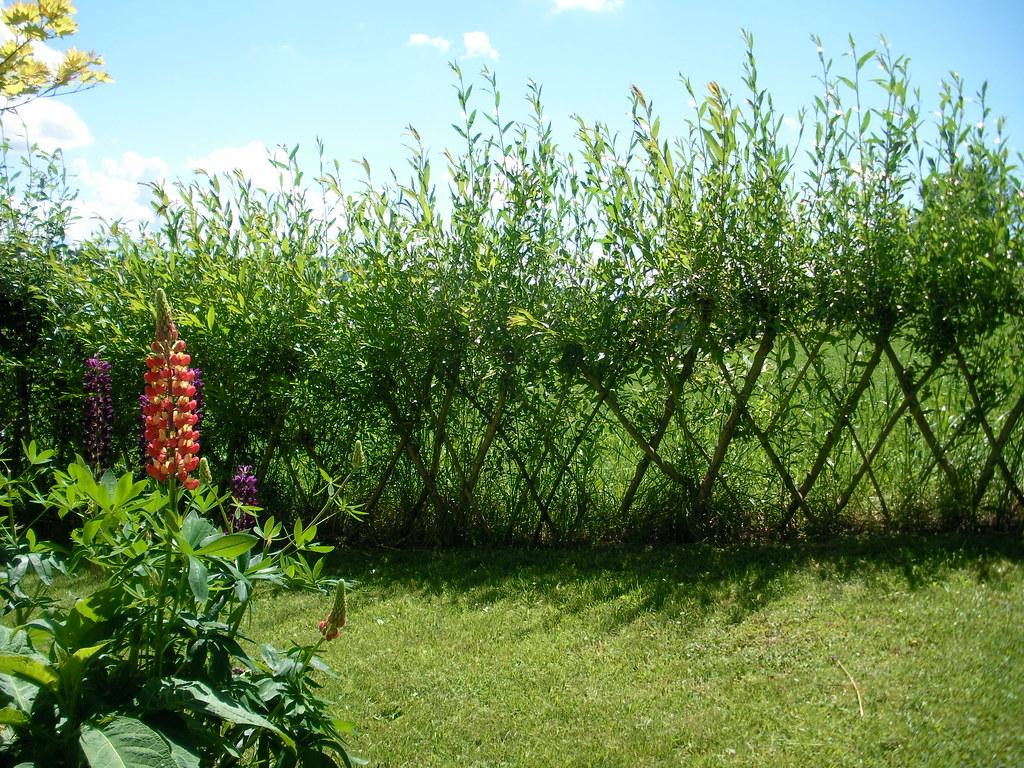 The World S Best Photos Of Garten And Weiden Flickr Hive Mind