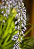 (A Great Capture) Tags: show flowers toronto ontario canada home garden march spring gardening trade springtime on canadablooms ald 2013 ash2276 ashleyduffus ashleylduffus wwwashleysphotoscom