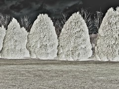 giant ghost hedges (zbigphotography (1M+ views)) Tags: trees winter france green art grass artwork europe artistic surreal ghostly lorraine hedges canong12