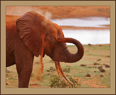 Red dust tears! (Rainbirder) Tags: kenya tsavoeast loxodontaafricana africansavannahelephant rainbirder