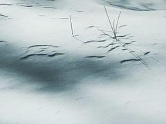 Pages à écrire. Pages to write (Amiela40) Tags: new winter shadow ombre line projects write nouveau projets printemps lignes écrire saison changement pagesblanches