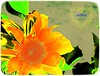 (lucidcats) Tags: light red orange plant flower green leaves yellow vancouver washington leaf state blossom bloom modified vancouverwa lucidcats thebestyellow