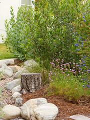 Dry stream, verbena, ceanothus. (Van in LA) Tags: ca garden native pasadena tpf drystream sturdevant