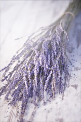 _MG_9098 (_qll) Tags: wood stilllife nature still bath lavender product lavendel