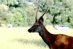 Natural environment (Scott Lewis Photography.1) Tags: wild macro nature animals closeup deer wilderness naturalenvironment