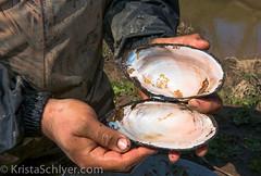 Anacostia 4-13-16-5720 (Anacostia Watershed Society) Tags: urban river nationalpark nps wildlife watershed krista mussel kenilworth wetland anacostia kennilworthaquaticgarden watershedwildlife schlyer