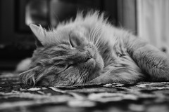 being warm (keith midson) Tags: cat sleeping warm cosy rug fireplace