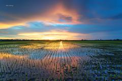 Magic sunset (Alex cheong) Tags: gnd leefilter fe1635mm sonya7r sonymalaysia storm cloud color magicmoment paddyfield tanjungkarang malaysia sunset