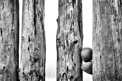 Bossington Groynes 02 (Photograferry) Tags: exmoor nationalpark uk southwest england outside nopeople landscape nature 2016 bossington beach pebbles groynes wooden posts old