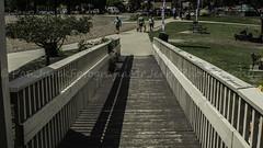 untitled-43 (polishamericanphotographer) Tags: sunday sunday08212016 august 2016 berea bereaohio coelake cuyahogacounty westside westerncuyahogacounty weekend westernsuburbs westernburbs westernsuburbia digitalphoto digitalphotography digitalcamera digitalcameras park parks publicpark citypark cityparks ohio outdoors outdoorphotography thegreatoutdoors thebuckeyestate sony alphamount sonyalphamount sonyalphamount77v apscsensor sigma2870f28
