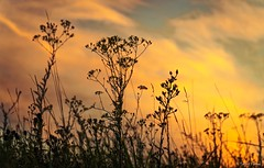 Megint este.. (tferi666) Tags: ngc travel sunset gold sony next ilce a6300 zempln hungary magyar nice night sonyflickraward sonyflickrawardgold epz18105mmf4goss 18105 beautyful