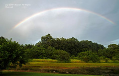 Rainbow and Cranes (AngelaC2009***) Tags: 2016 summer august florida riverview pond rain rainbow weather fujifilmfinepixs8200 birds sandhillcranes