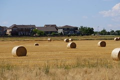 Hay time (Let Ideas Compete) Tags: hay bales field agriculture
