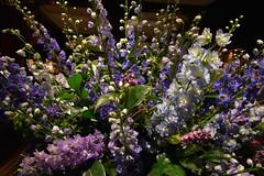Flower Display at Ralph Lauren (Eddie C3) Tags: newyorkcity flowers madisonavenue ralphlauren manhattan uppereastside