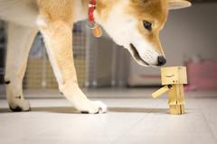 Yotsuba365 Day90 (Tetsuo41) Tags: yotsuba shibainu dog