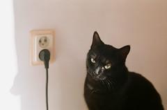 Electrization (g.bikmanis) Tags: nikonfe2 nikon fe2 helios77m4 helios 77m4 fujifilm fujicolor c200 iso 200 cat light electrization rosette black white wall electrical extension cord shadow face