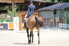 IMG_8234 (dreiwn) Tags: dressage dressur dressuur pferd reitturnier turnierreiten pferdesport horse horseback horseriding equestrian reitverein dressurprfung kandare doublebridle reiten pferde reitplatz ridingarena