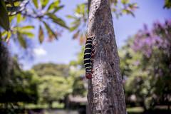 Una vida llena de color TampikoFilms (Andres TampikoFilms) Tags: gusano gusanos