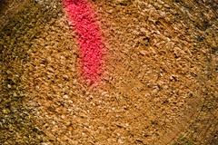 ckuchem-8295 (christine_kuchem) Tags: abholzung baum baumstmme bume einschlag fichten holzeinschlag holzwirtschaft wald waldwirtschaft