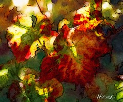 Natures canvas of fall grapevines turning colors. Painted with brushstoke (Harold Litwiler, Poppy Big Oak Photography) Tags: brushstroke fallcolors grapevine fall