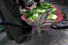 Lunch Time (inthestride) Tags: guayaquil ecuador parque seminario canon g15 iguana lunch park animals travel flscher inthestride