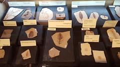 Amazing fossils!