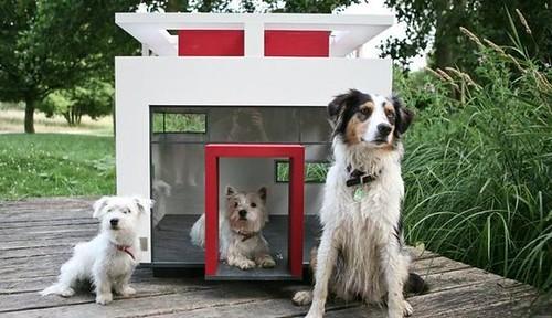 caseta-para-perro-the-cubix
