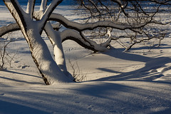 Tree covered by snow (psvrusso) Tags: winter snow tree covered