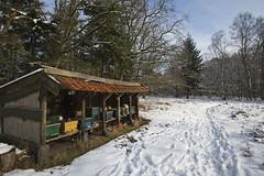 Bijenstal in de sneeuw (webted) Tags: winter vlucht sneeuw austerlitz buiten kou februari koud bijen hetwittehuis koude bijenkast bijenkasten bijenstal