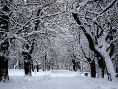 (ela_s) Tags: park winter zima aleja kasztany canons90