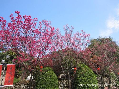 北投賞櫻-IMG_8283