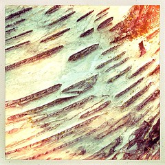"""#tree #bark #detail #stripes • <a style=""""font-size:0.8em;"""" href=""""https://www.flickr.com/photos/61640076@N04/8487584304/"""" target=""""_blank"""">View on Flickr</a>"""