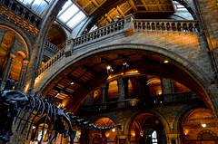 NHM - Main Hall (Paulo N. Silva) Tags: uk london skeleton mainhall dinossaur thenaturalhistorymuseum