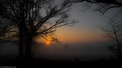 Misty Morning Sunrise. (Neil. Moralee) Tags: morning sun mist tree silhouette fog sunrise nikon frost shine somerset devon rise chard p7000 hemyock neilmoraleenikon