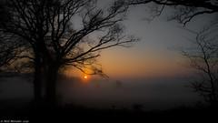Misty Morning Sunrise. (Neil. Moralee) Tags: morning sun mist tree silhouette fog sunrise nikon frost shine somerset devon rise chard p7000 hemyock neilmoraleenikon