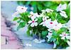 :) (durooob) Tags: life flowers flower macro ورود ورده زهور ازهار