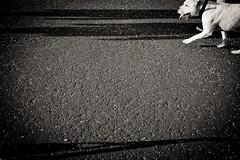 Dog (ChrisJohnston82) Tags: shadow blackandwhite bw dog art canon scotland blackwhite edinburgh path canoneos crammond canonefs1855mmf3556 400d eos400d canoneos400d canon400d crammondbeach