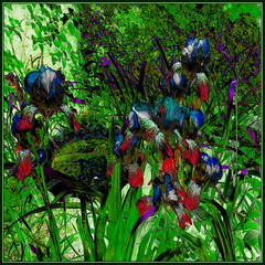 St. Paddy's Irises (Tim Noonan) Tags: flowers colour green texture contrast digital photoshop mood shapes stpatricks shining tone irises hypothetical brighter darker vividimagination greenscene shockofthenew stickybeak newreality sharingart awardtree maxfudgeawardandexcellencegroup magiktroll exoticimage digitalartscene netartii vividnationexcellencegroup