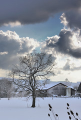 Touch the Sky (Chrisnaton) Tags: winter tree clouds touchthesky