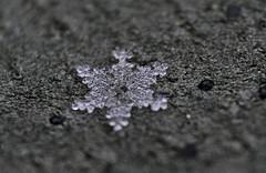 Snowflake Beauty (BKHagar *Kim*) Tags: snowflake snow macro snowflakes al alabama athens leatherjacket bkhagar