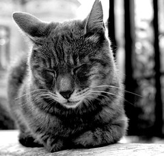 (Tete Semp) Tags: bw cats cat bokeh bigotes gatos bn gato dormir