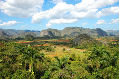 DSC_8100 paysage rgion de vinales Cuba (ichauvel) Tags: voyage travel trees sky clouds colours couleurs explorer cuba champs culture ciel arbres terre fields nuages vinales palmiers mogotes collines caraibes